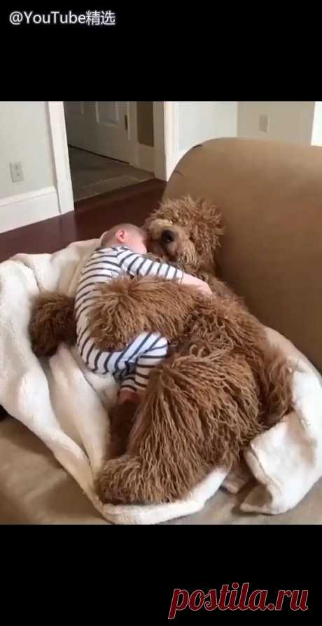 my baby love sleeping with dog so much