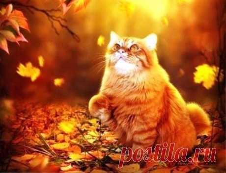 Осенний кот .