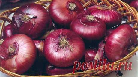 La cebolla roja se encontraba la medicina potente contra el cáncer | Polza-vred.su