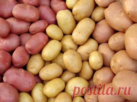 La cosecha mala de las patatas: las causas y la decisión