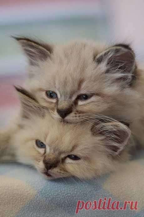 Stunning Picz: Kitten Stack