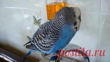Какой милый говорящий попугай!