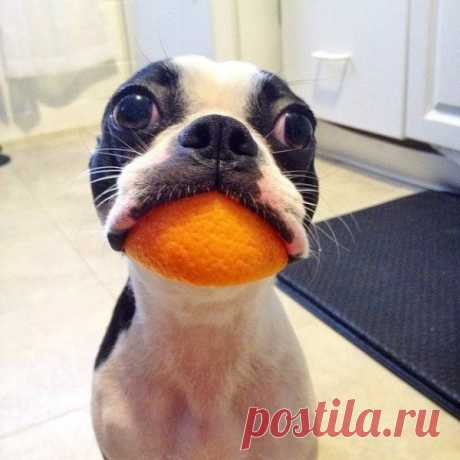 Las fotos ridículas de los animales