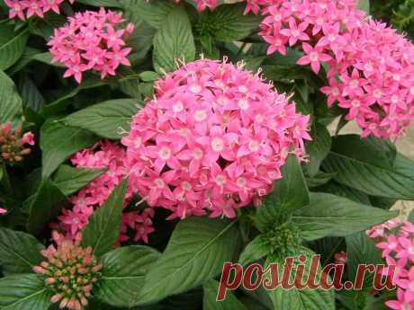 Безумно красив и интересен цветок моего дома, вызывает восторг и зависть моих гостей | Все о домашних цветах | Яндекс Дзен