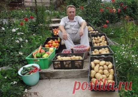 5 видов подкормок от Игоря Лядова  Игорь Лядов удивительный огородник, который поражает своими урожаями многих даже самых опытных дачников и фермеров. Вот несколько его рекомендаций, как можно просто и дешево восстанавливать плодороди…