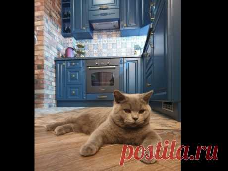 Очаровтельный котэ на кухне 😾😼😻
