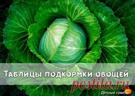 """Таблицы подкормки овощей Скороспелые овощи обычно подкармливают один раз, созревающие долго - 2-3, ну а суперскоростные, """"реактивные"""" (кресс-салат, редис) - выращивают без дополнительного питания. Подкормки вносят после дождя или полива. Подкормки, удобрения, бывают или жидкие - под корень и по листьям - или сухие, которые заделывают в землю."""