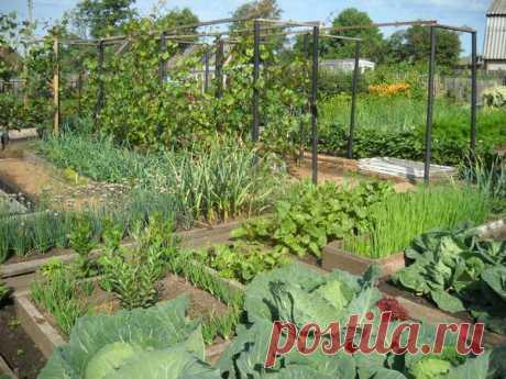 Советы опытной огородницы — 6 соток