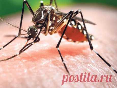5 типов людей, которые сильнее привлекают комаров