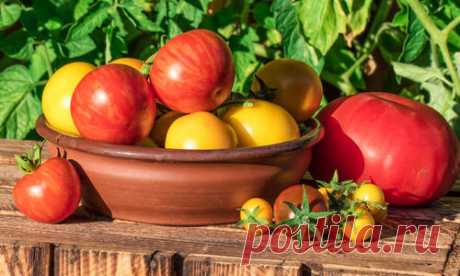 What taste of tomatoes depends on