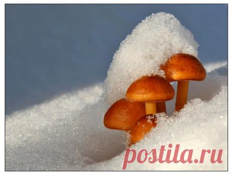 Зимой за грибами