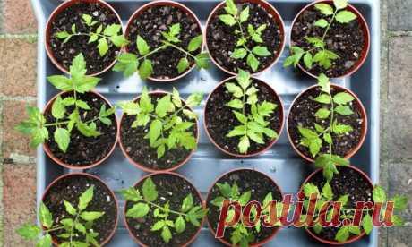 Правильная посадка семян на рассаду в 2020 году: сроки, советы, календарь   Pentad
