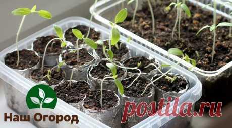 Эффективный способ протравливания семян: больше никакой черной ножки | НАШ ОГОРОД | Яндекс Дзен