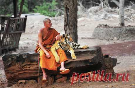 Buddha Adherents Photograph by Dmitriy Yevtushyk