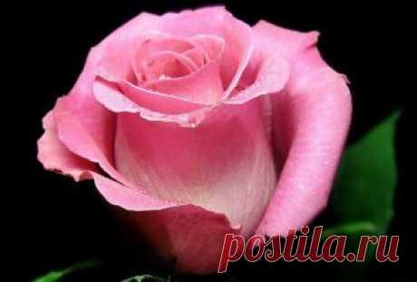 Узнай цветок своего имени — Бесплатные поздравления