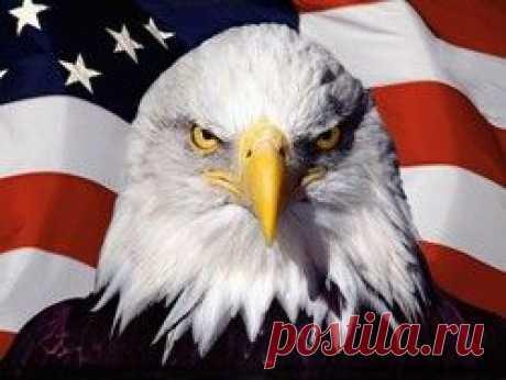 Полный список всех военных преступлений США : Политика Newsland – комментарии, дискуссии и обсуждения новости.