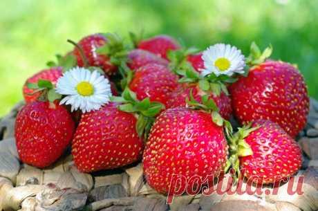 Простые способы увеличить урожайность клубники на 50-60% — Садоводка