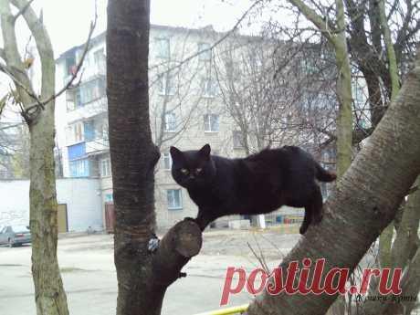 Черные коты очень непросты | Кошки & Коты | Яндекс Дзен ✨ Автор: Нина Стрелкова. ✧ Вообще, конечно, коты любого другого цвета тоже не такие уж простые. Но черные – самые загадочные из всех. У них всегда серьезный, проницательный, мудрый взгляд. Они ведут себя солидно и достойно. Чёрные коты как будто знают, что некоторые суеверные люди их боятся. И в зависимости от настроения и отношения к человеку они могут воспользоваться этим, напустив на себя самый таинственный или строгий вид