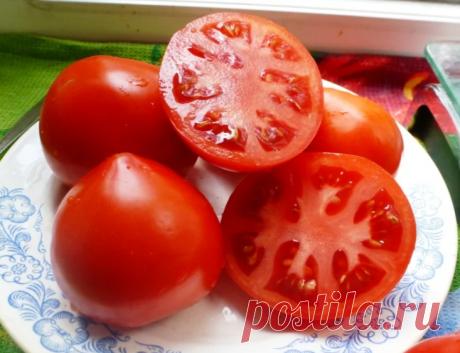 Те, кто любит сладкие помидоры должны обязательно посадить эти сорта   Космический урожай   Яндекс Дзен