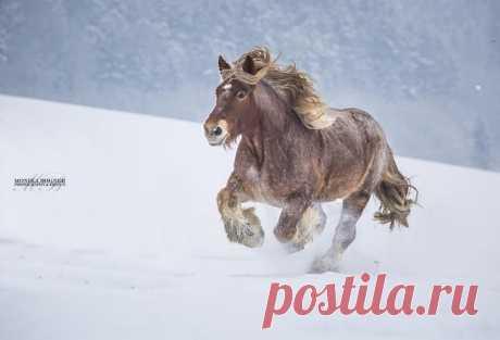 30 идеальных фотографий лошадей – грация, краса и сила