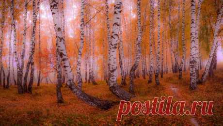 Волшебный лес Юрия Морозова