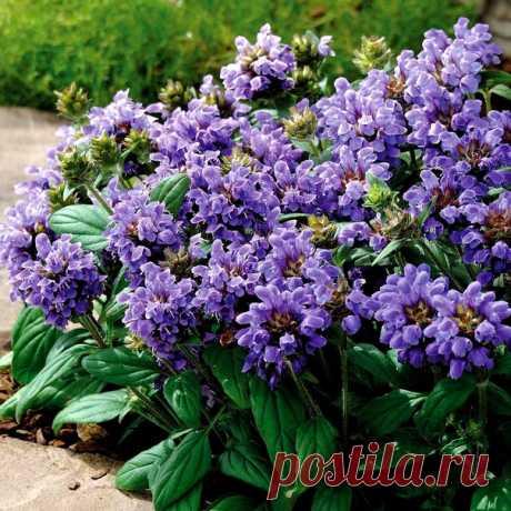 ✿·•●...√ Нежности, мира, добра, красоты, Пусть улыбнутся Вам эти цветы!