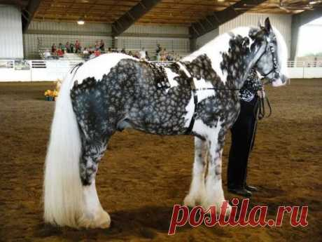15 чудесных лошадей, от красоты которых перехватывает дыхание — Жизнь под Лампой!