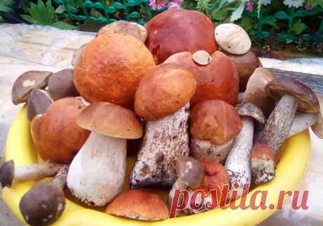 Сходила утром за грибами