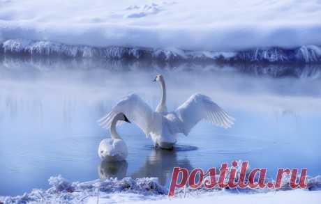Фотография Лебединое озеро. из раздела природа №7016124 - фото.сайт - Photosight.ru