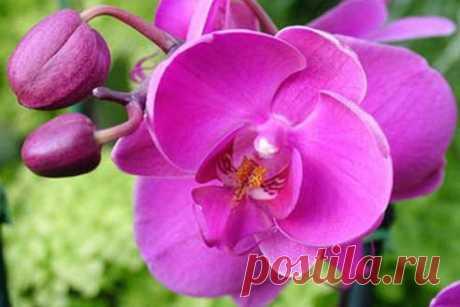 Орхидея в доме: каким образом растение влияет на судьбу! На самом деле она является настоящей скрытой угрозой