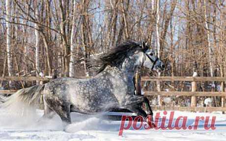 Обои животные, лошади, конь, зима, снег скачать обои для рабочего стола,картинки на рабочий стол,заставки,изображения из раздела Животные Лошади