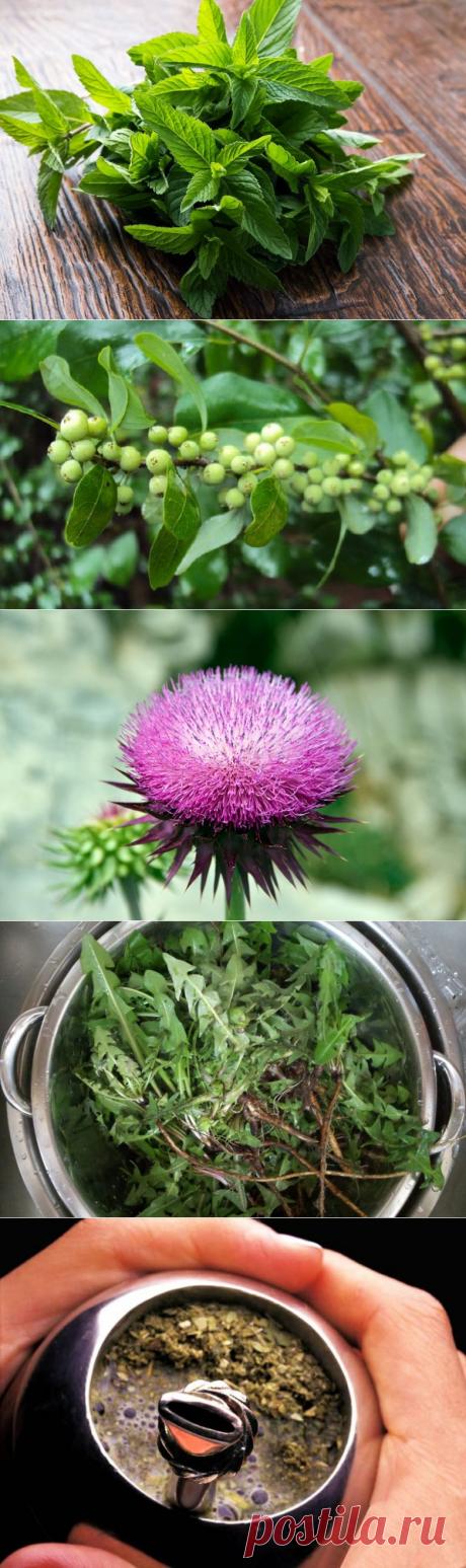 10 лучших трав для похудения и выведения токсинов / Будьте здоровы