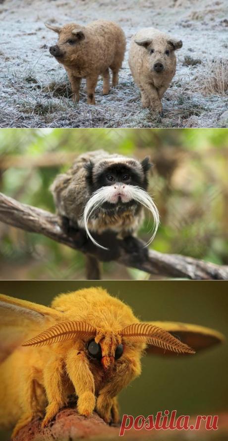 10 уникальных животных, которых фотошопила сама природа