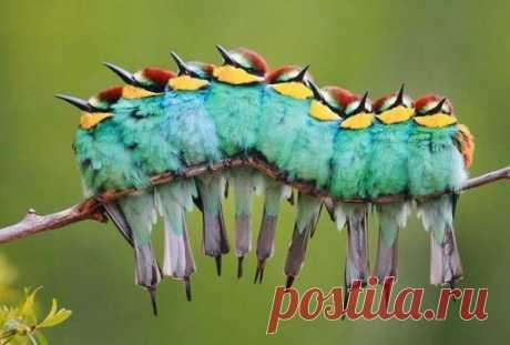 Птицы, которые любят обниматься