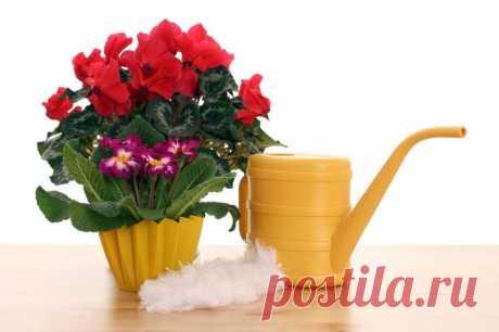 Чем подкормить домашние цветы в домашних условиях? Комнатные растения нужно подкармливать не менее одного раза в месяц. Удобрения для цветов в домашних условиях своими руками может сделать даже начинающий цветовод. Для приготовления питательного раств...