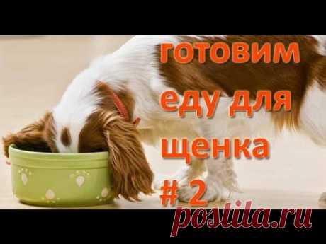 Моя собака. Готовим еду для щенка. Как сварить правильную кашу.