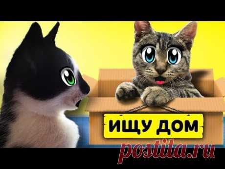 ИЩУ ДОМ! КОТ МАЛЫШ и КОШЕЧКА МУРКА и Бездомный КОТЕНОК! ХЭЛЛОУИН МЫШКА наш НОВЫЙ ПИТОМЕЦ! Kitty cats