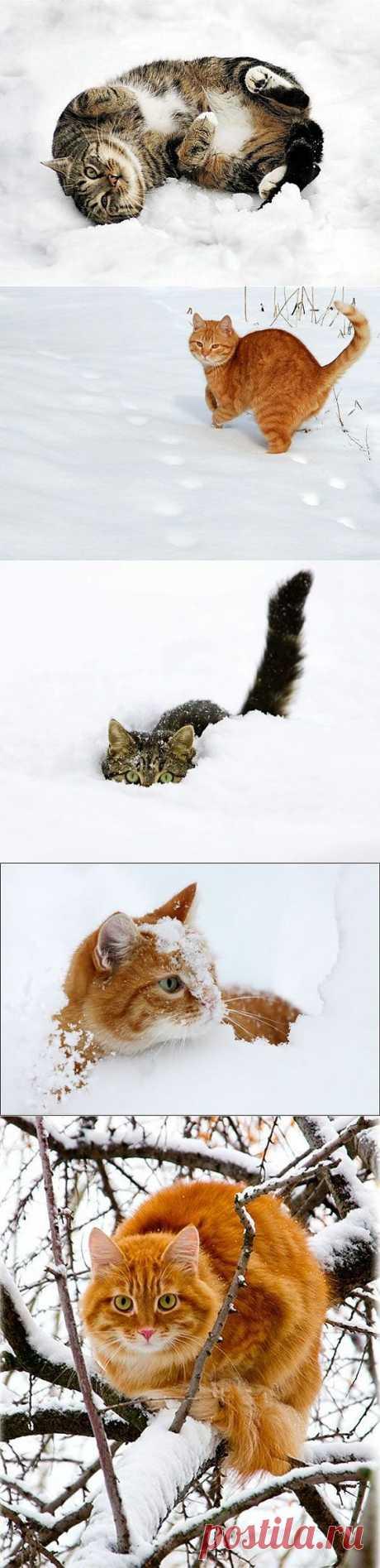 Кошки на снегу.