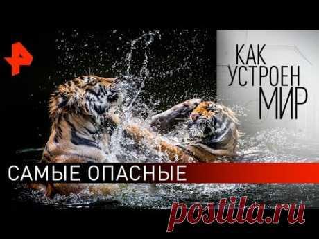 """Самые опасные. """"Как устроен мир"""" с Тимофеем Баженовым (29.10.19)."""