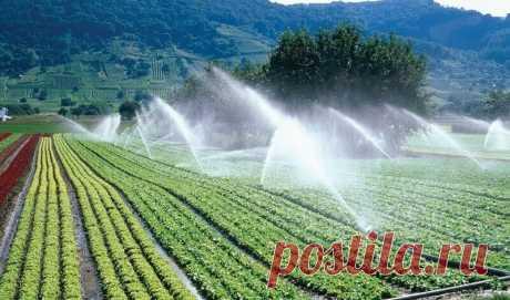 Как узнать, какая почва в огороде, кислая или щелочная можно по сорнякам