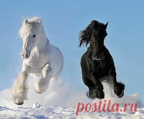 Лошадь - великолепное создание природы- сила, грация, красота!!!!