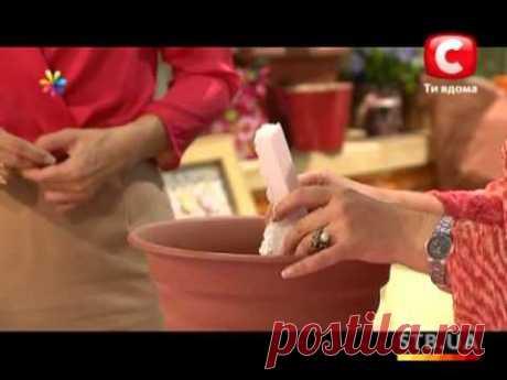 Выращиваем помидоры на подоконнике - Все буде добре - Выпуск 42 - 11.09.2012 - YouTube