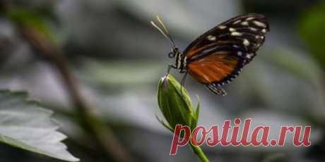 Чем питаются бабочки в природе? | На всякий случай