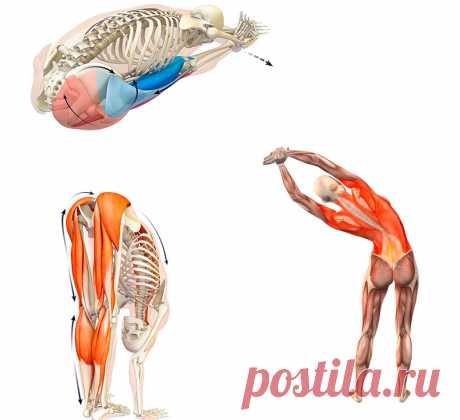 5 универсальных упражнений от болей в спине Малоподвижный образ жизни, нарушения осанки, постоянное нахождение за компьютером приводят к болям в спине. Эти упражнения дают полезную нагрузку на мышцы спины, способствуют их растяжке. Освоить гимнастику просто, и вы в результате забудете о болях в спине.