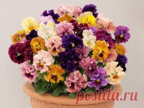 Удачного всем дня!  Весеннего, солнечного настроения, добра и радости!
