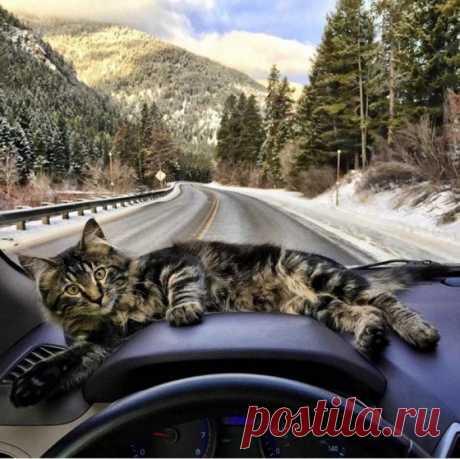 Путешествующий котэ