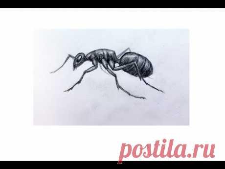 Как нарисовать муравья карандашом учимся рисовать насекомых поэтапно