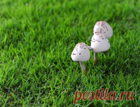 Почему на грядках растут грибы | Болезни и вредители (Огород.ru)