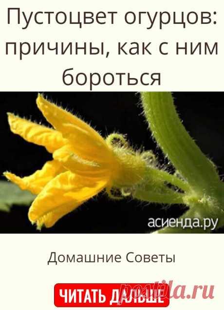 Пустоцвет огурцов: причины, как с ним бороться