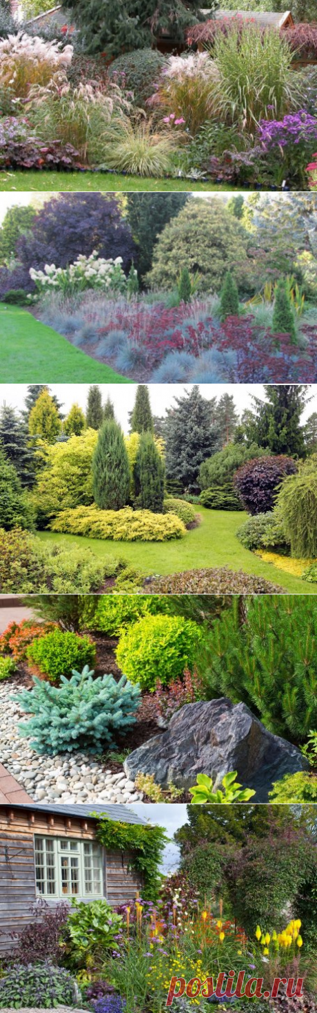 That it is possible to put near coniferous – examples of successful combinations of plants | Ideas of design (Огород.ru)